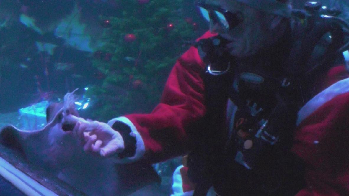 Germany: Santa swims in shark tank for Christmas