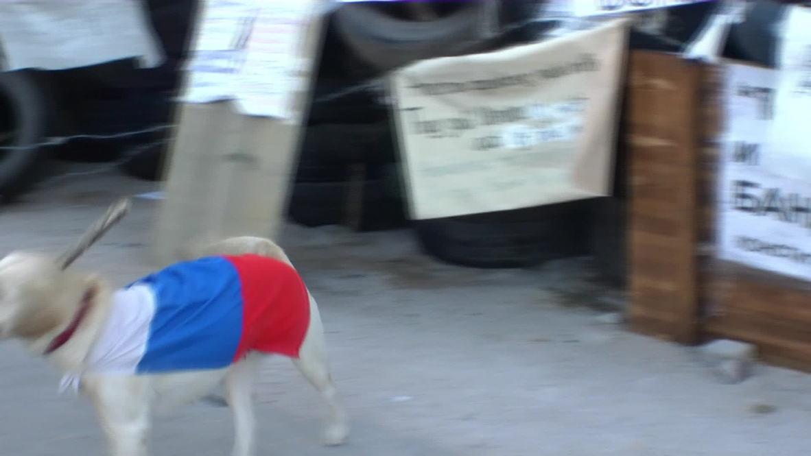 Ukraine: Pro-Russian pooch mans Donetsk barricades