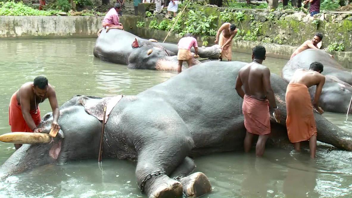 India: Elephants get pampered at animal salon
