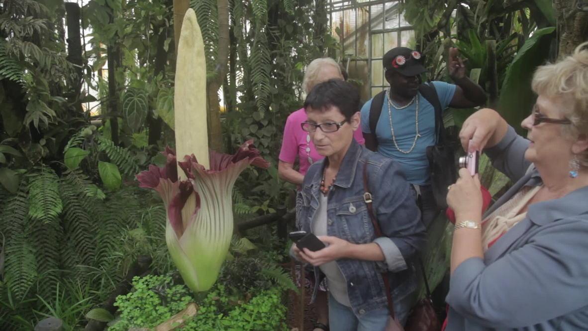 France: Flower fanciers witness the mighty Titan's Penis