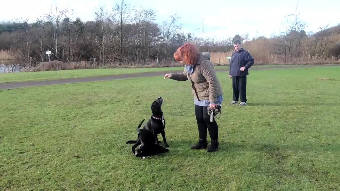 UK: Meet 'Roo' - half dog, half KANGAROO