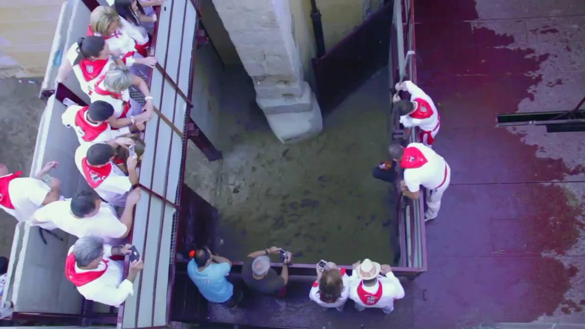 Spain: Bull fatally shot at controversial Sanjuanes de Coria festival