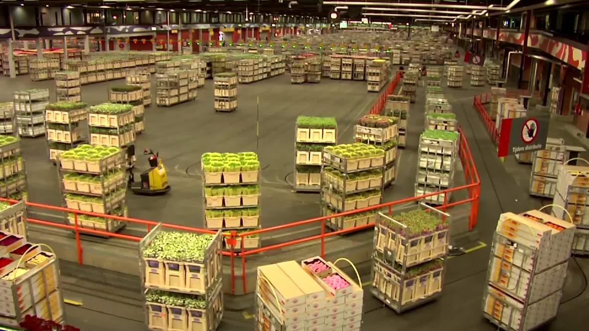 Netherlands: Russian watchdog eyes Dutch flower import ban *ARCHIVE*