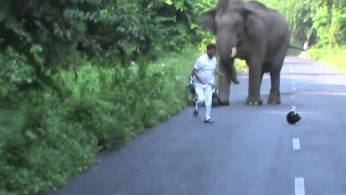 India: Biker narrowly escapes rampaging elephant