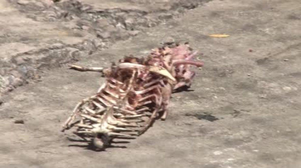 Honduras: Thousands of crocodiles starve after U.S. sanctions target family