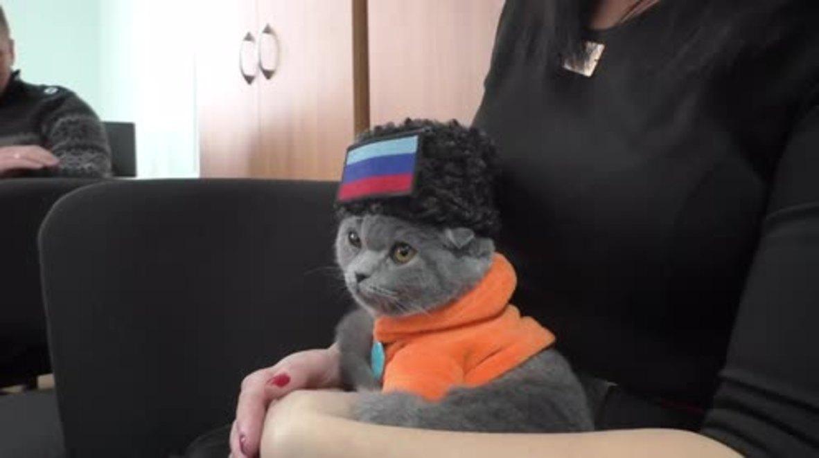 Ukraine: Cat wearing fancy outfit wins patriotism award