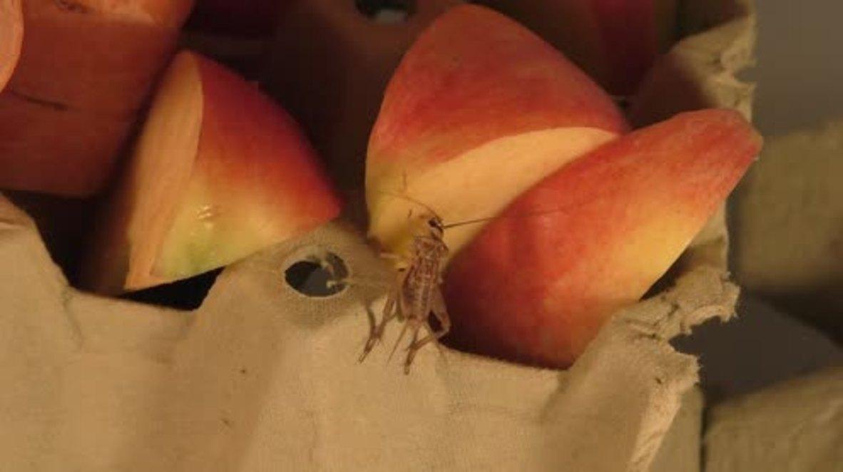 Denmark: Danish entrepreneurs launch insect-based juice drink in Copenhagen