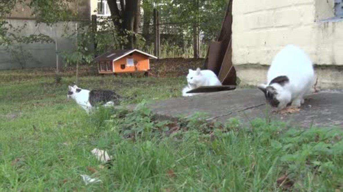Feline good - Riga resident builds homes for orphaned cats ensuring his eternity in heaven