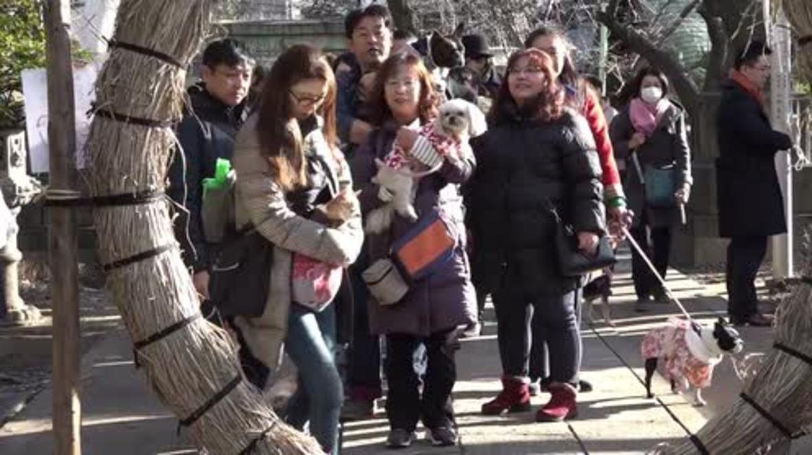 Japan: Shrine prayers so pooch doesn't get sick as a dog
