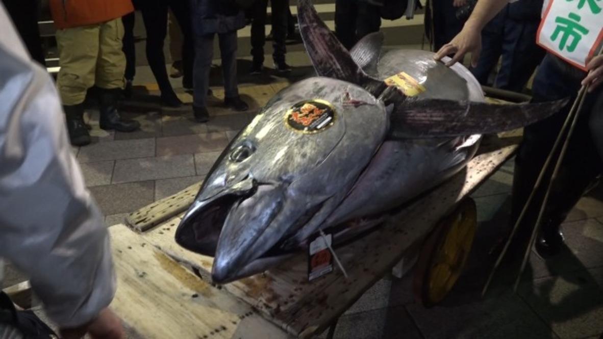 Japón: Un atún se vende por 267.700 euros en el mercado de Tokio