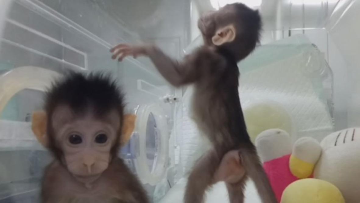 China: Ground-breaking primate clones unveiled in scientific first