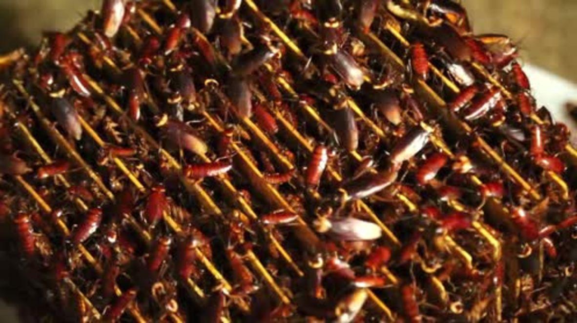 China: La granja de cucarachas más grande del mundo cría 6 BILLONES de insectos para uso medicinal