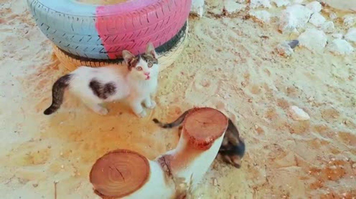 Siria: Un santuario de gatos ofrece refugio y cuidados a los felinos desvalidos de Alepo