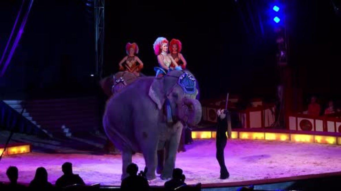 German Dumbo flies over crowd but none got injured