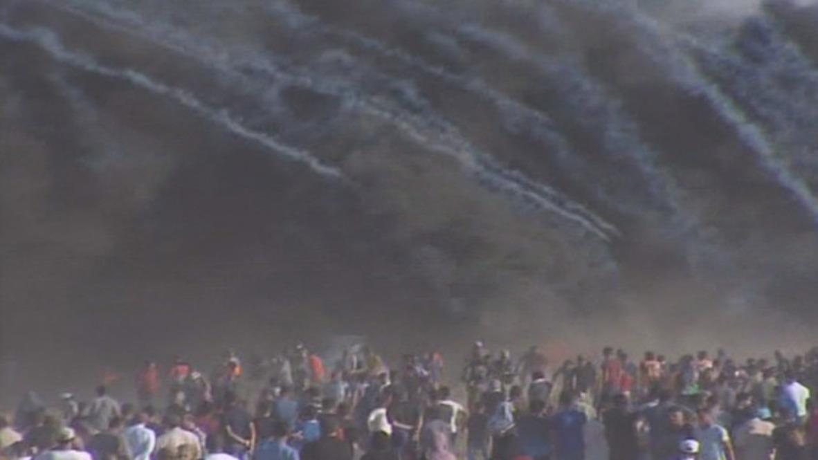 State of Palestine: Medic killed, 242 injured at Gaza protest
