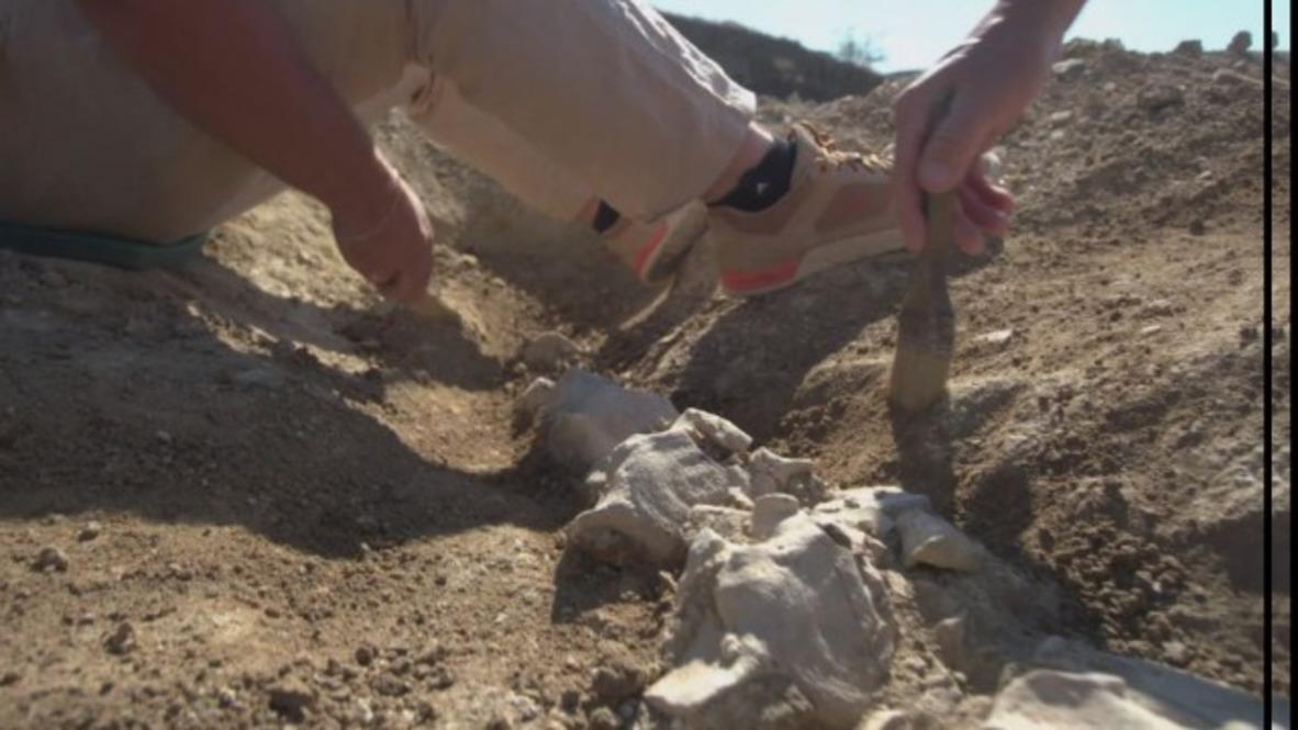 Rusia: Arqueólogos hallan en Crimea restos de una ballena de hace 10 millones de años