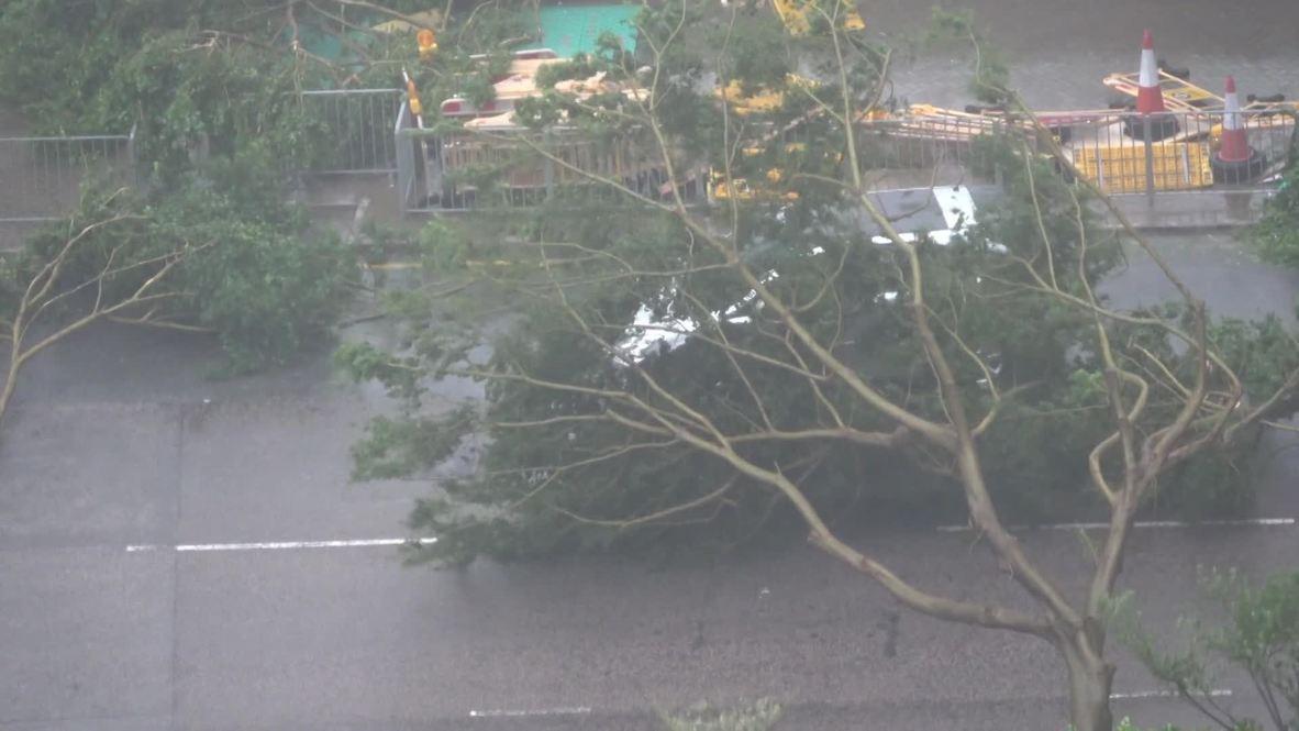 Hong Kong: Driver narrowly avoids fallen tree as typhoon rages on