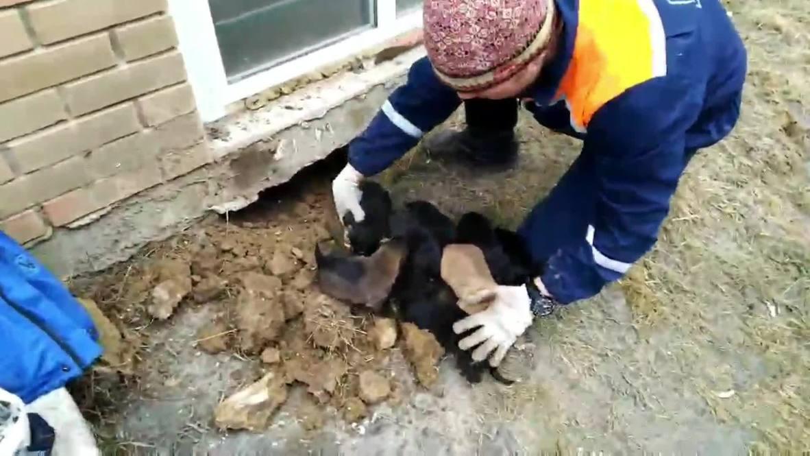 Россия: В Иркутске спасли десять осиротевших щенков