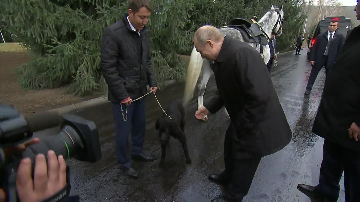 «Это моя добыча!» - Путину в Бишкеке подарили щенка по кличке Шерхан
