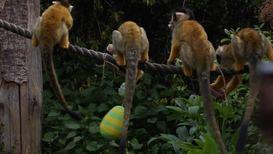 Великобритания: Животным в Лондонском зоопарке подарили яйца с сюрпризом к Пасхе