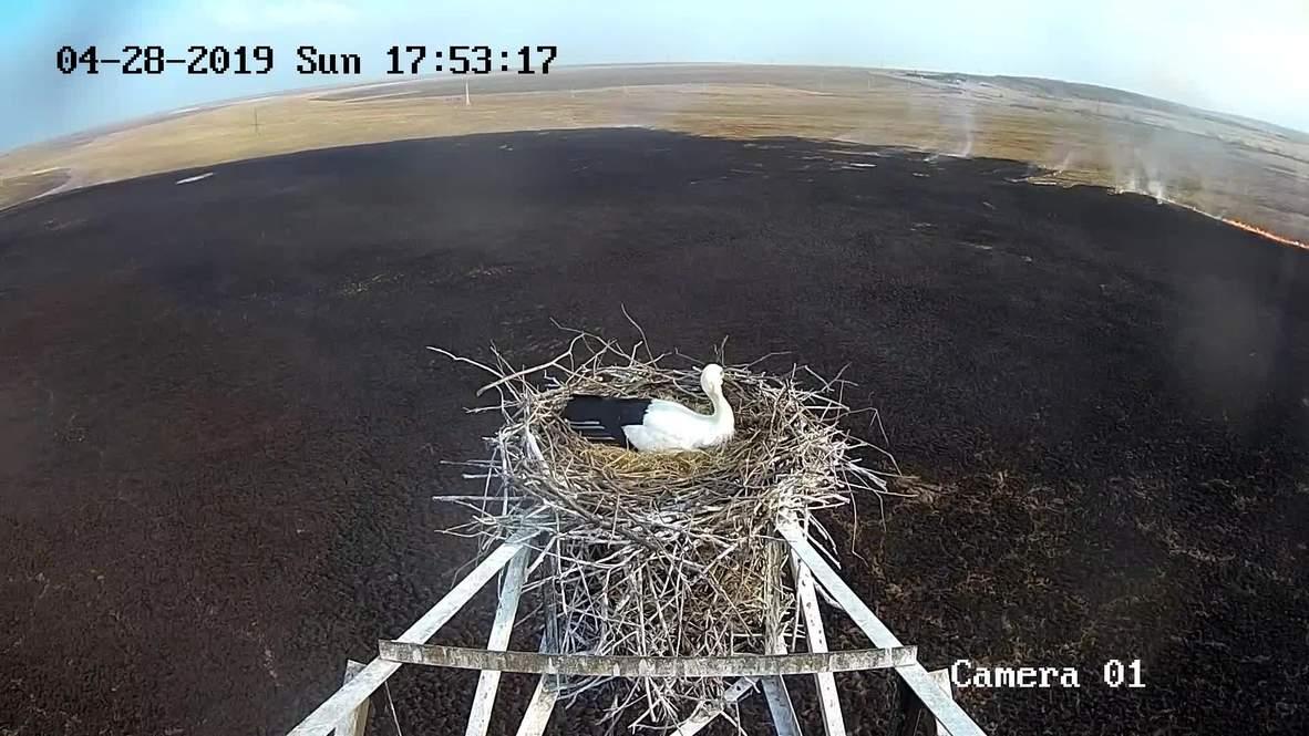 Россия: Аист принес! Зная важность миссии, храбрая птица не оставила гнездо несмотря на огонь