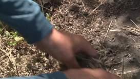 Россия: Ложка дёгтя в бочке мёда. В Саратовской области - массовое отравление пчёл