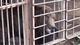 Россия: Медвежий угол. Большое, сильное животное взаперти год, спасибо добрым людям - кормят
