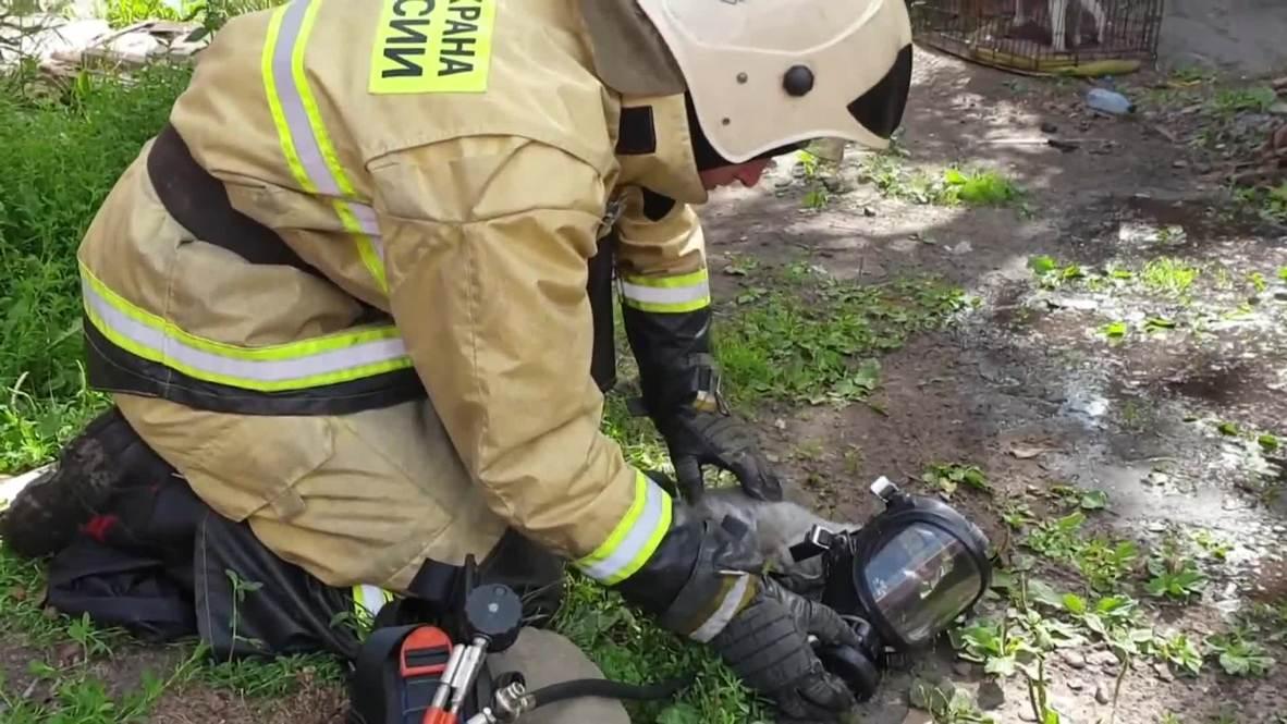 Вылезайте, кот и кошка, из чердачного окошка! Томские пожарные спасли усатого из огня