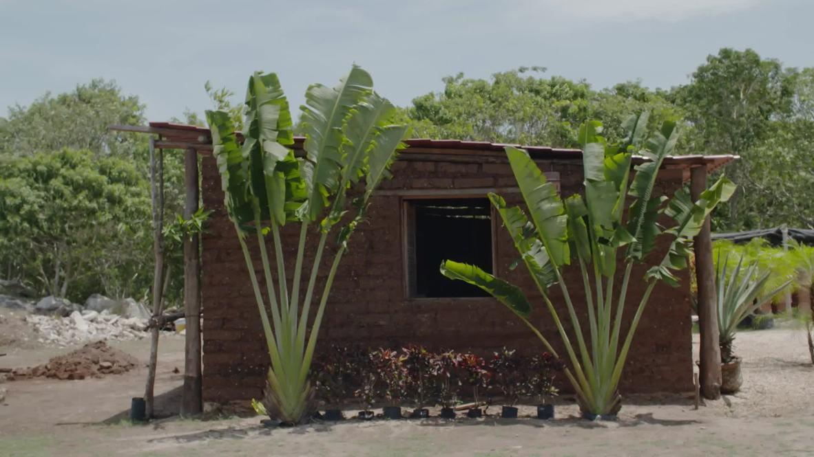 México: Construyen casas con ladrillos del sargazo que plaga las costas del Caribe