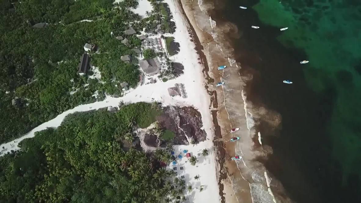 México: Imágenes aéreas muestran toneladas de sargazo cubriendo las playas del Yucatán