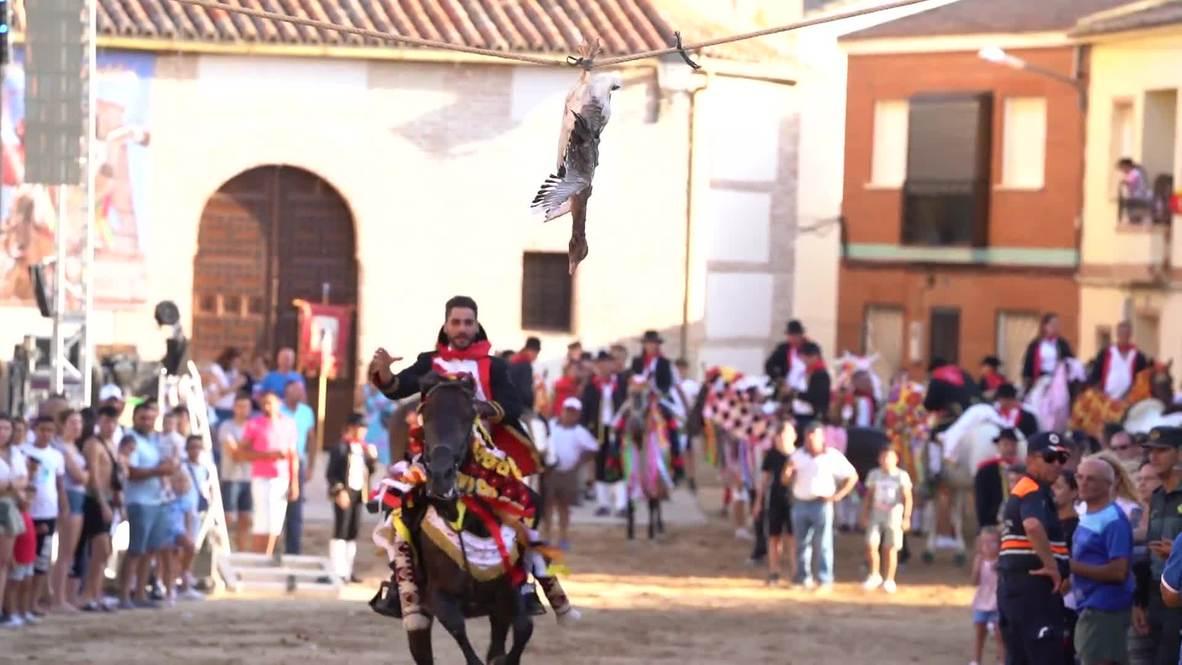 España: Decenas de jinetes participan en fiesta típica que consiste en arrancarle la cabeza a un ganso