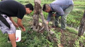 Familia mexicana caza escorpiones para venderlos a laboratorios