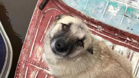 Россия: Братья наши меньшие. Добровольцы эвакуируют животных в Амурской области