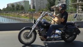 Пёс Барбос и необычный мотокросс. Астраханский байкер не расстается с собакой в поездках