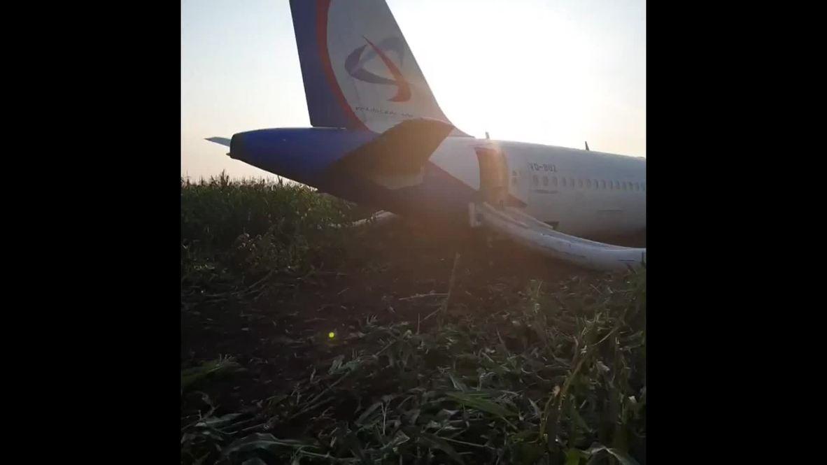 Rusia: Vea los primeros instantes tras el aterrizaje forzoso del avión de Ural Airlines *EXCLUSIVO*