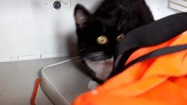 Россия: Добрая примета. Сотрудники МЧС вернулись в зону паводка за черными котами