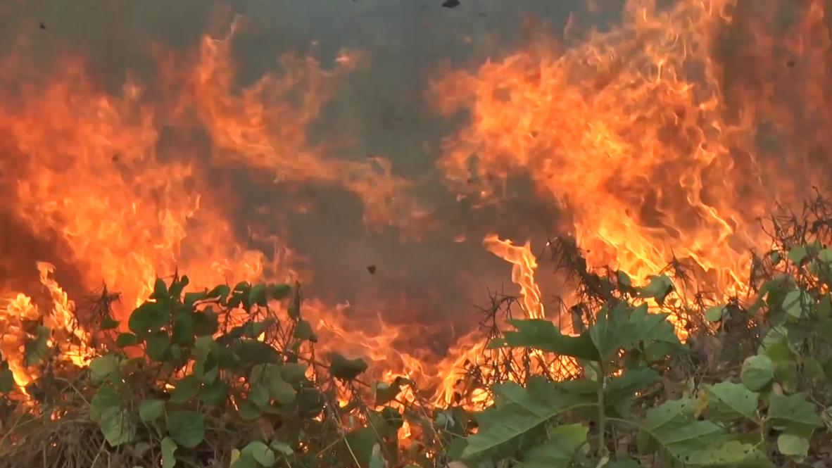 Brasil: Avanzan los devastadores incendios forestales de la Amazonia