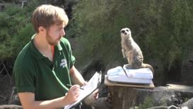 Reino Unido: Zoo de Londres realiza su inventario midiendo y pesando más de 800 especies diferentes
