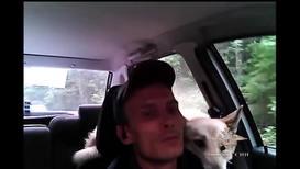 Россия: Двое в машине, не считая полицейского. Инспектор ГИБДД помог собакам найти дорогу домой