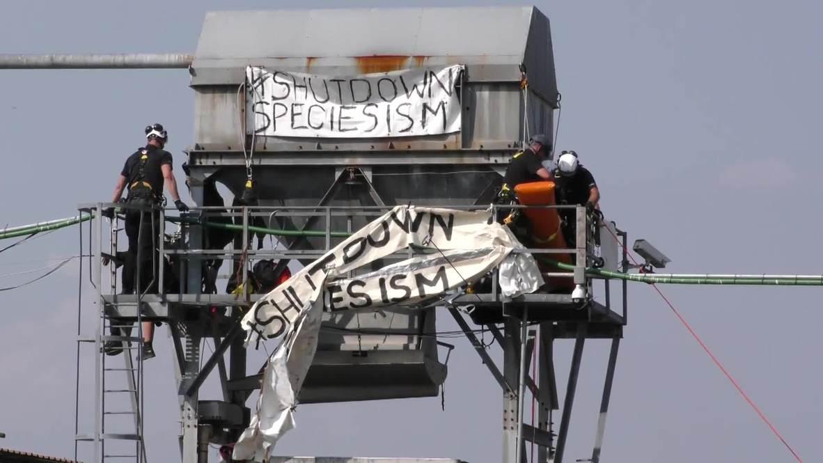 UK: Six 'speciesism' activists arrested after storming Kent slaughterhouse