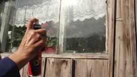 """Россия: """"Деревню облепили"""". Рои мух терроризируют Челябинскую область"""