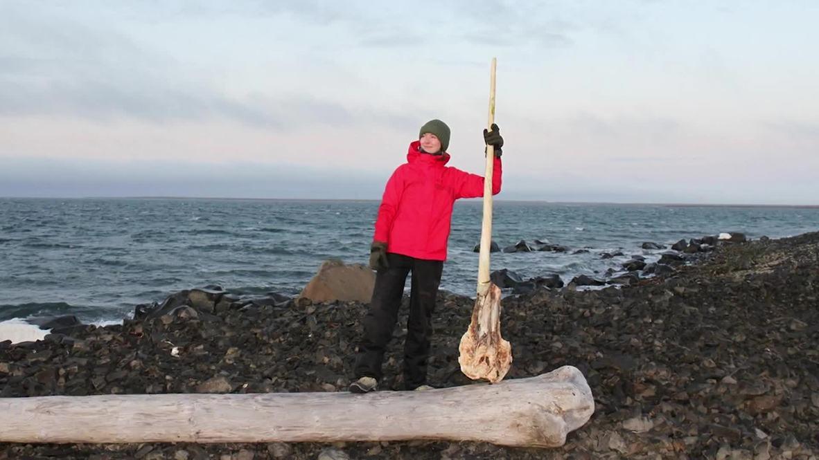 Гигантская зубочистка. Рог арктического единорога обнаружили на Земле Франца-Иосифа *ФОТО*