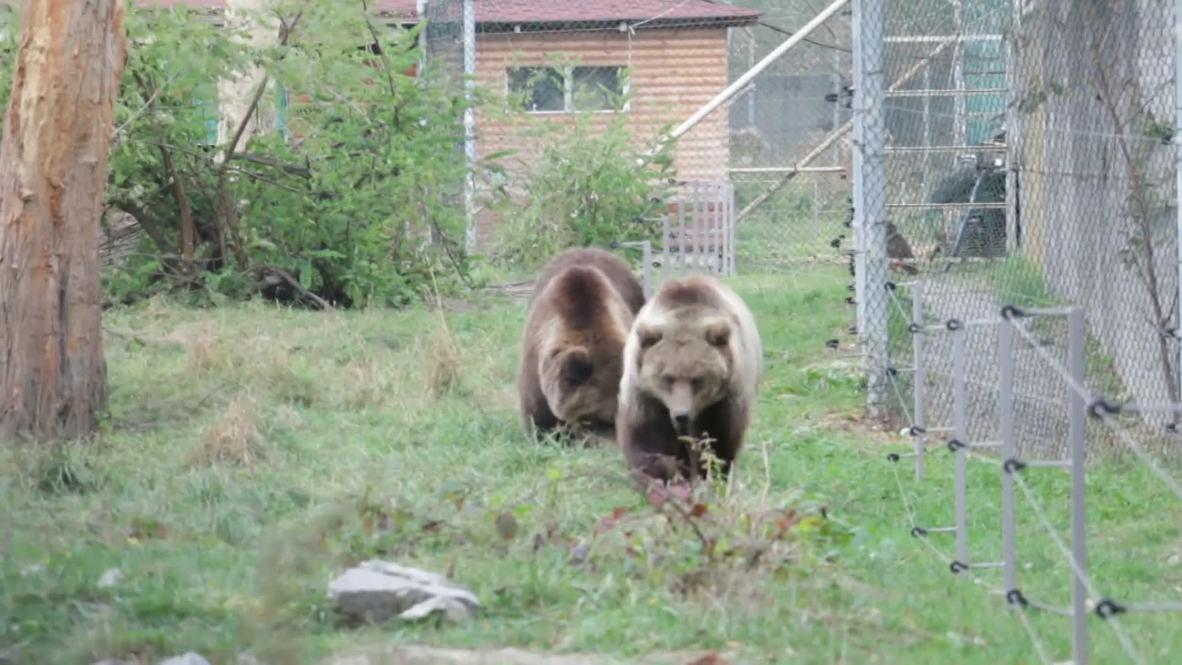 """""""Без воды, без травы, без всего"""". В Житомире спасают медведей с тяжелым прошлым"""