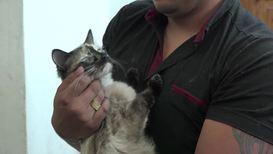 Cat-ching baby in stair danger! 'Superhero' cat rescues infant in Bogota