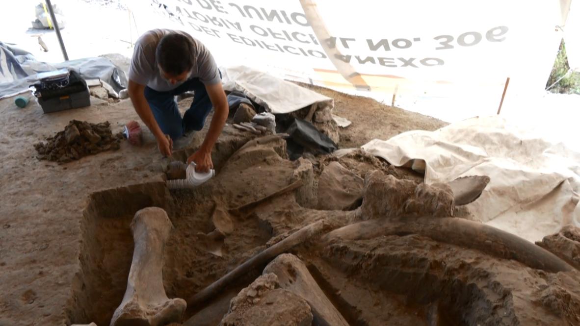 Ловись, мамонт, большой и маленький. В Мексике нашли древние охотничьи ловушки