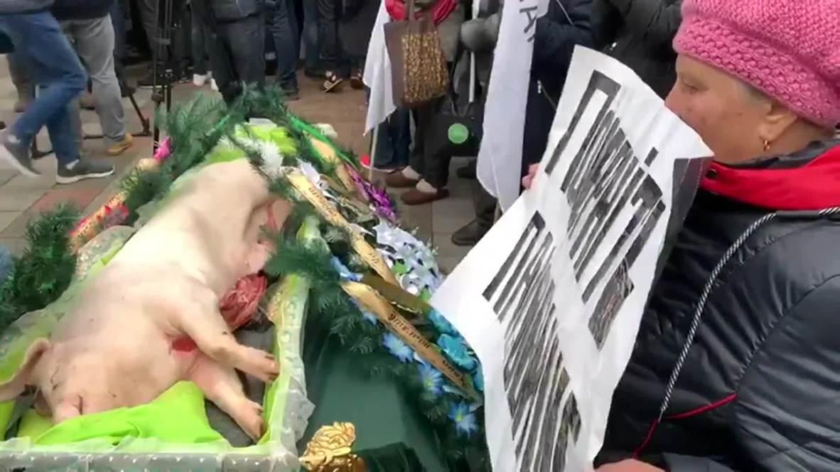 Украина: Подложили свинью. Фермеры принесли труп животного под стены Верховной Рады