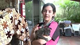 Эквадор: Приют для животных спас обезьяну-ревуна от браконьеров
