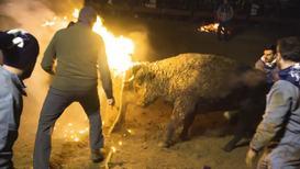 España: El Toro Jubilo, festival donde se prenden los cuernos del animal, se celebra pese a presión animalista