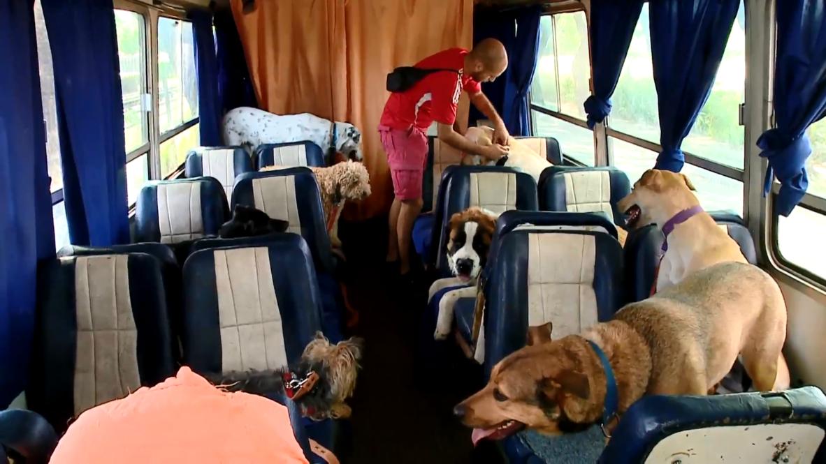 ¡Todos a bordo de 'La Bestia'! El 'canimóvil' de Buenos Aires