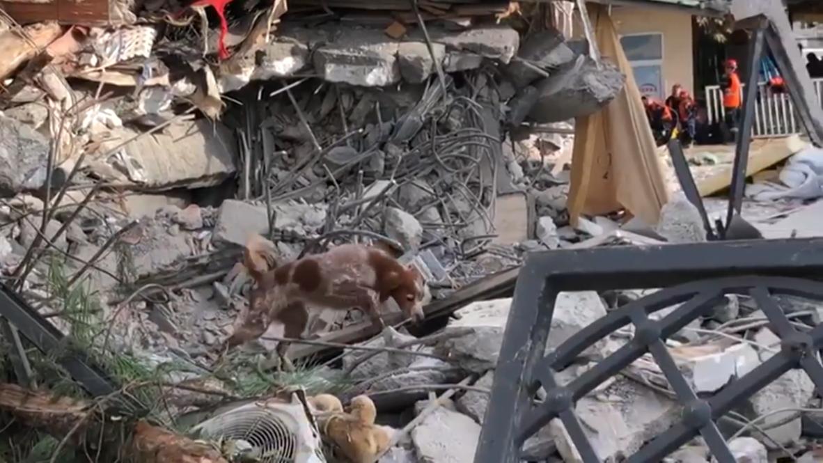 Albania: Swiss rescue dogs help search for quake survivors in Durres
